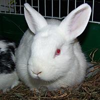 Adopt A Pet :: Fernando - Alexandria, VA