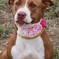 Adopt A Pet :: Merida - Lacey, WA
