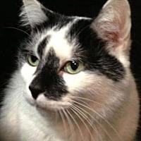 Adopt A Pet :: Abbie - Westlake Village, CA