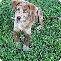 Adopt A Pet :: Tanner - Scottsboro, AL