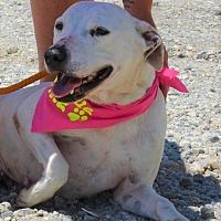 Adopt A Pet :: Blanche - Southbury, CT