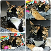 Adopt A Pet :: Francie - Forked River, NJ
