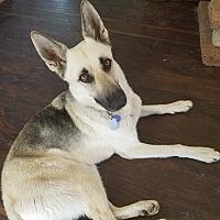 Adopt A Pet :: Sedona - West Hollywood, CA