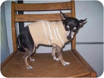 Rat Terrier Mix Dog for adoption in Sacramento, California - Pebbles