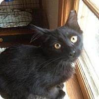 Adopt A Pet :: Colt - Cleveland, OH