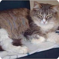 Adopt A Pet :: Peeps - El Cajon, CA
