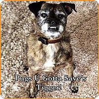 Adopt A Pet :: Tigger - Chesterfield, VA