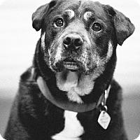Adopt A Pet :: Diesel - Portland, OR