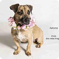 Adopt A Pet :: Dory - Poway, CA
