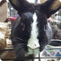 Adopt A Pet :: Clever - Williston, FL
