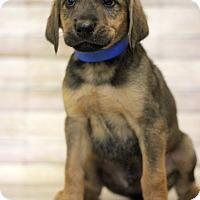 Adopt A Pet :: Pidgeot - Waldorf, MD