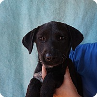 Adopt A Pet :: Auggie - Oviedo, FL