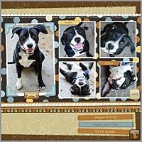 Adopt A Pet :: Sasha - Loma Linda, CA