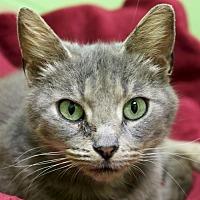 Adopt A Pet :: Janet - Jefferson, WI