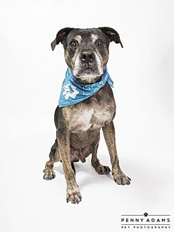 Hound (Unknown Type) Dog for adoption in Franklin, Tennessee - AXEL