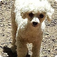 Adopt A Pet :: Gracie - Alpharetta, GA