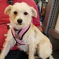 Adopt A Pet :: Arianna - Phoenix, AZ