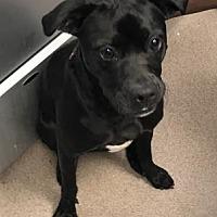 Adopt A Pet :: Mack - Decatur, GA