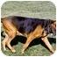 Photo 2 - Bloodhound Dog for adoption in Phoenix, Arizona - Chloe