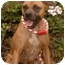 Photo 4 - Staffordshire Bull Terrier Dog for adoption in Long Beach, California - Molly