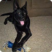Adopt A Pet :: Sadie - Council Bluffs, IA