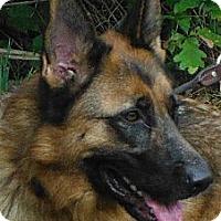Adopt A Pet :: Max 3629 / 3923 - Sterling, VA