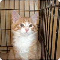 Adopt A Pet :: PoGo - Wenatchee, WA
