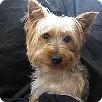 Adopt A Pet :: Beau - Atlanta, GA