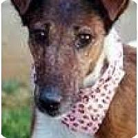 Adopt A Pet :: Jennie - Longmont, CO