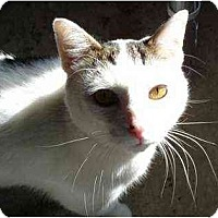 Adopt A Pet :: Conwell - Jenkintown, PA