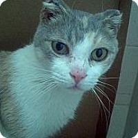 Adopt A Pet :: Arya - Syracuse, NY