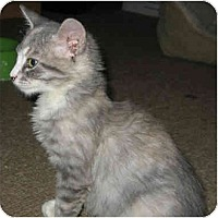 Adopt A Pet :: Mazie - Davis, CA