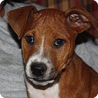 Adopt A Pet :: Charlie - PENDING, in Maine - kennebunkport, ME