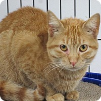 Adopt A Pet :: Sally Anne - Norwich, NY