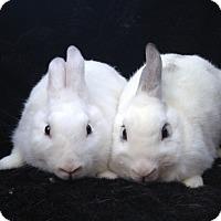 Other/Unknown Mix for adoption in Watauga, Texas - Adelaide & Silas