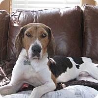 Adopt A Pet :: Cooper - Delaware, OH