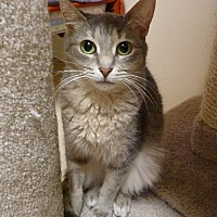 Adopt A Pet :: Whisper - Westville, IN