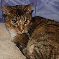 Adopt A Pet :: Ericka - Holden, MO