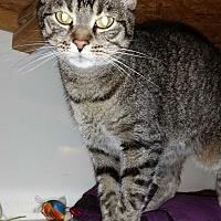 Adopt A Pet :: Jojo - St. Louis, MO