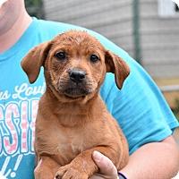 Adopt A Pet :: JEANAY - South Dennis, MA