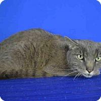Adopt A Pet :: A029690 - Norman, OK