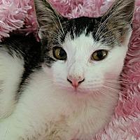 Adopt A Pet :: Tiny - Williston Park, NY