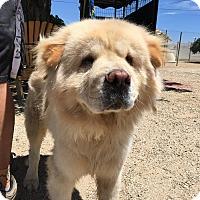 Adopt A Pet :: Bobby - Eastsound, WA