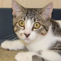 Adopt A Pet :: Stella - Quincy, IL