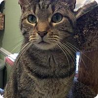 Adopt A Pet :: Garrison - Breinigsville, PA