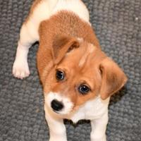 Adopt A Pet :: KONA - troutman, NC