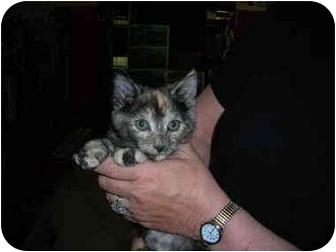 Domestic Shorthair Kitten for adoption in Riverside, Rhode Island - Jasmin