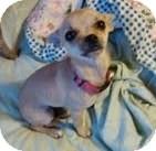 Chihuahua Mix Dog for adoption in San Diego, California - Winnie