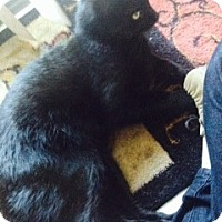 Adopt A Pet :: Bear - Piscataway, NJ