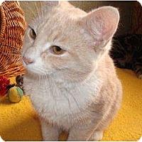 Adopt A Pet :: Simon - Morris, PA
